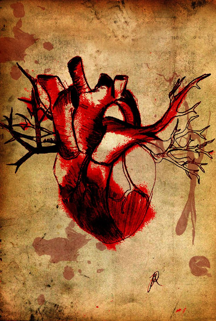 Drawn heart human heart Human 20+ heart on tattoo