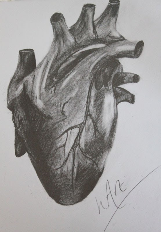 Drawn heart human heart Graphite detailed – drawing Real