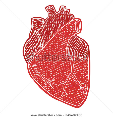 Drawn heart human heart  drawn hand hand on