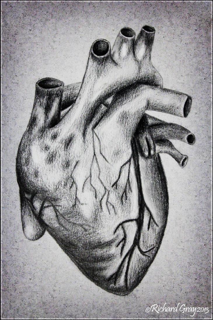 Drawn heart human heart By Heart RicGrayDesign on Heart