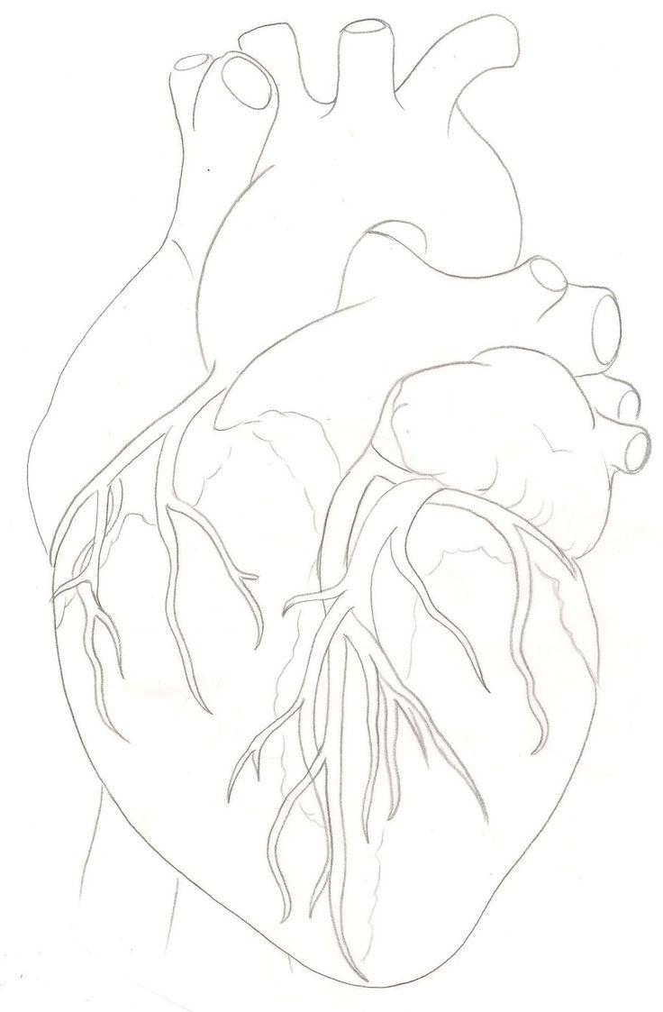 Drawn heart human heart By Tattoo ideas ~Metacharis Anatomical