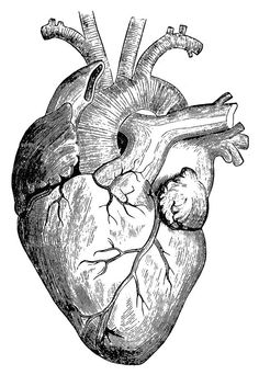 Drawn hearts draw Heart Vintage Heart Anatomical
