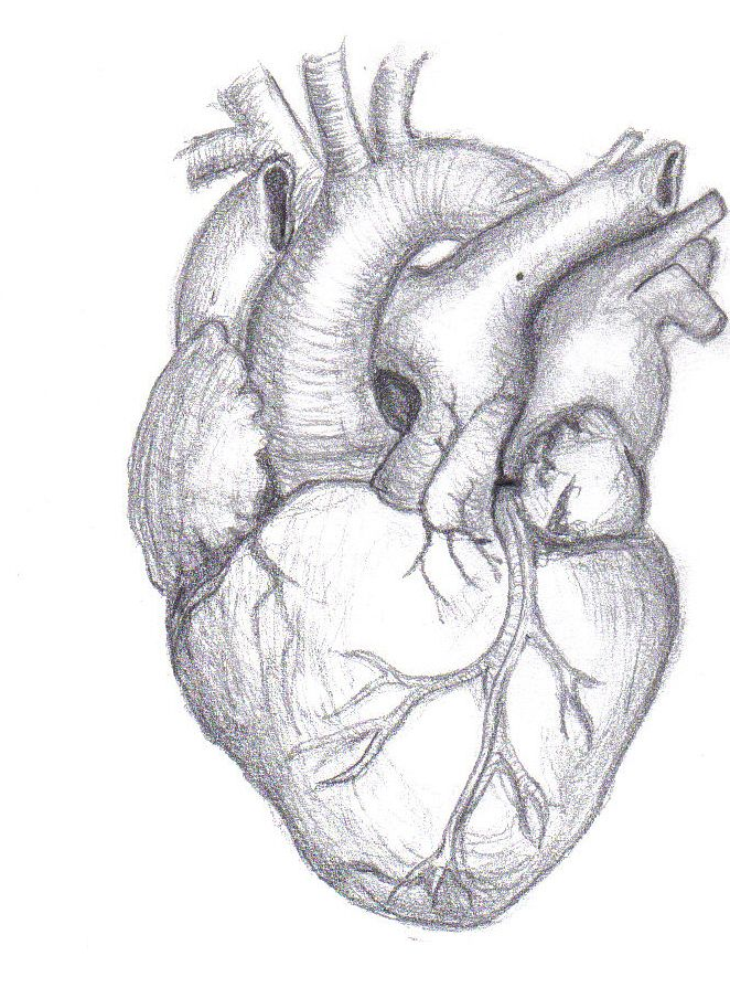 Drawn hearts draw Image Best com/download/ heart 25+
