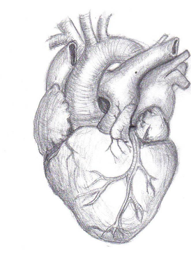 Drawn hearts pencil drawing Pencil broken Iskanje heart Google