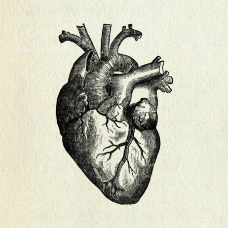 Drawn hearts body Heart Search of Human ideas