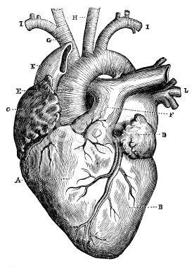 Drawn hearts draw Medical Best heart heart 25+