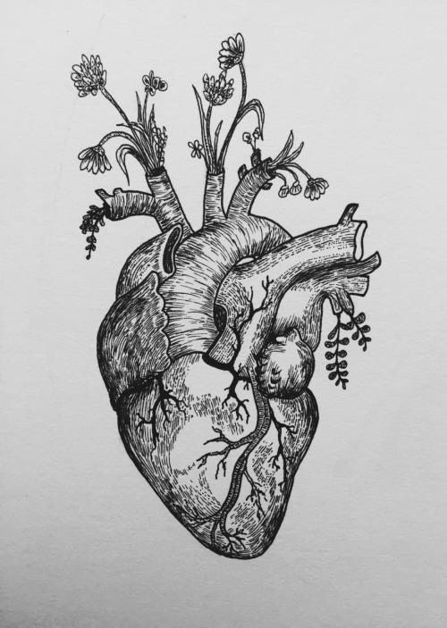 Drawn hearts draw Heart Heart Anatomical healthsanaz Drawing