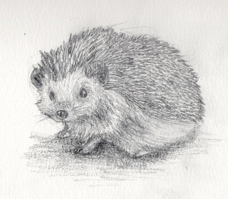 Drawn hedgehog Hedgehog by art 2014 drawings