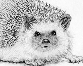 Drawn hedgehog Drawing Hedgehog cream mount pencil