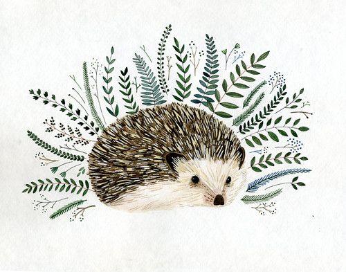 Drawn hedgehog Best one ideas is ani