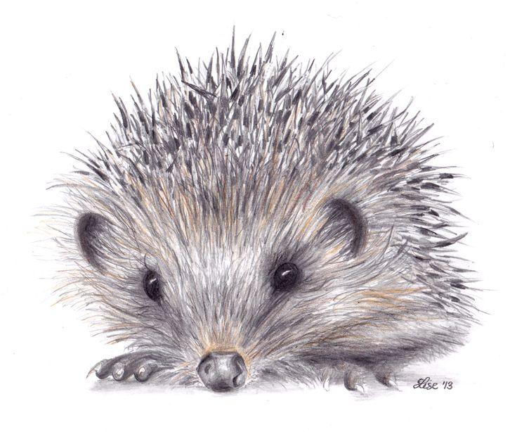 Drawn hedgehog Realistic Images Pencil Drawing Hedgehog