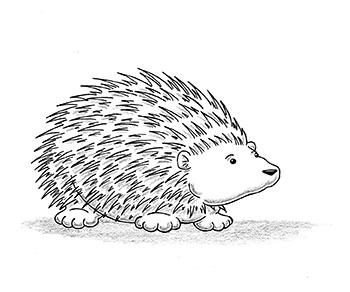 Drawn hedgehog – creativeliz fan Lady with