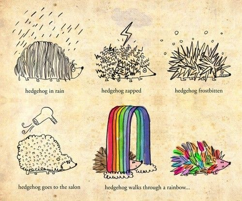 Drawn hedgehog doodle 490 Hedgehog images about doodles