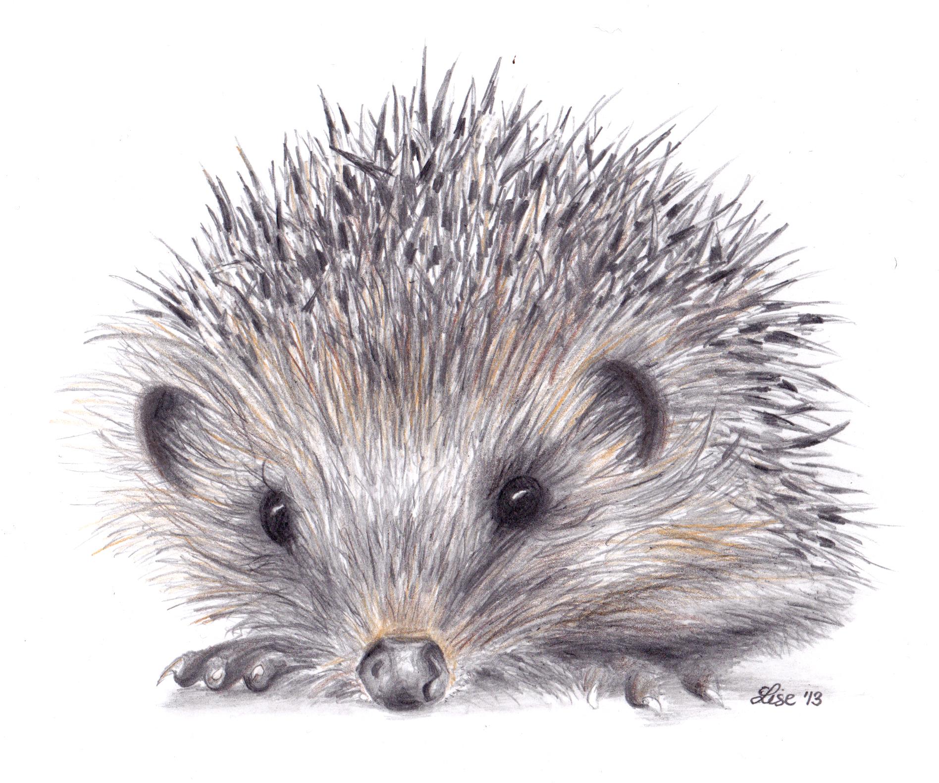Hedgehog clipart urchin More  Vittrup Lise Invasion