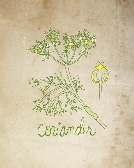 Drawn herbs Herb New Tea — Leaf