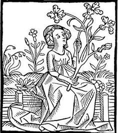 Drawn herbs Medieval Botanical Historische with Bomen