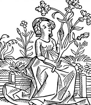 Drawn herbs A for gardens Castles to