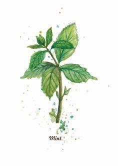 Drawn herbs Google tattoo Google leaves Search