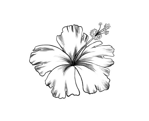 Drawn hibiscus I amazing would ink Pinterest