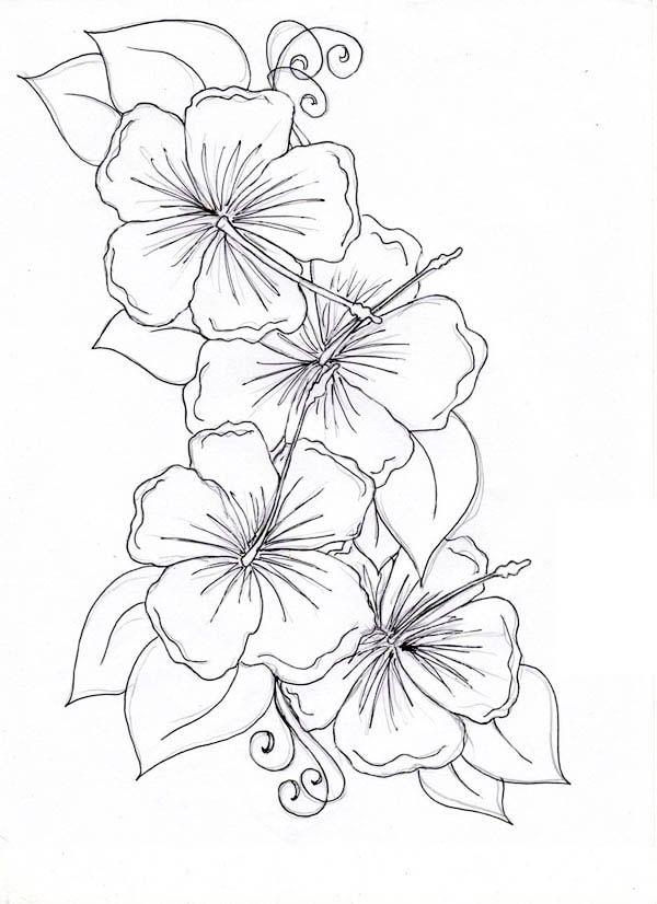 Drawn hibiscus Hibiscus Drawing Hibiscus Page Hibiscus