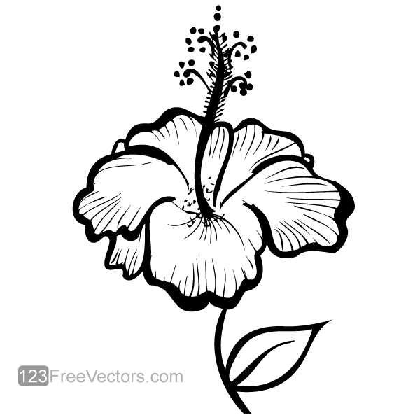 Drawn hibiscus Hand 123Freevectors Flower Drawing