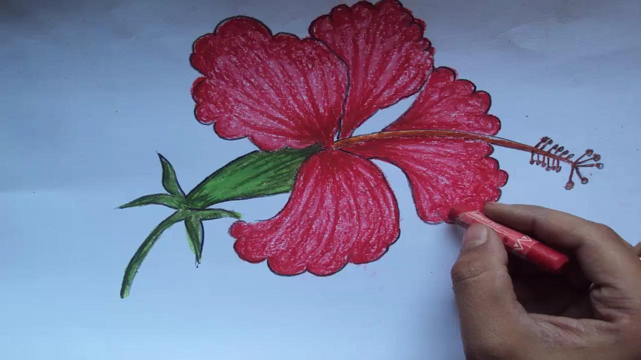 Drawn hibiscus beautiful flower Step How Beautiful a by