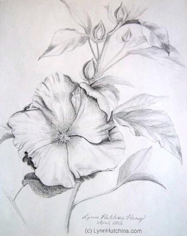 Drawn hibiscus beautiful flower Απεικονίσεις Beautiful Beautiful 30 Σχέδιο