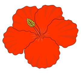 Drawn hibiscus beautiful flower Flowers to How Flower Draw