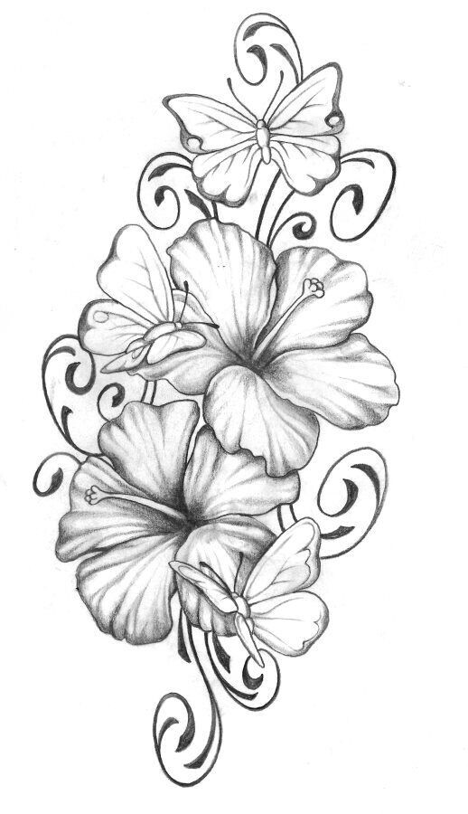 Drawn hibiscus beautiful flower Realistic with Flower Beautiful Color