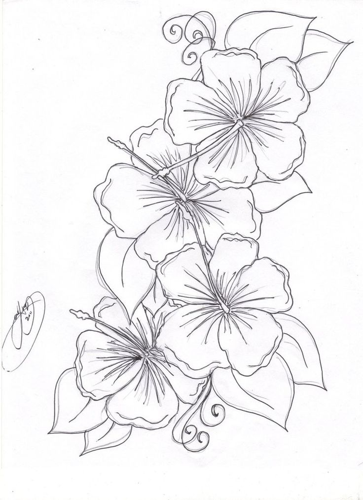 Drawn plant beautiful flower On Get download beautiful Pages