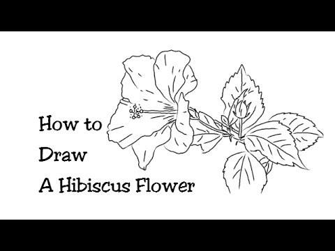 Drawn hibiscus beautiful flower To to Hibiscus Beautiful Draw