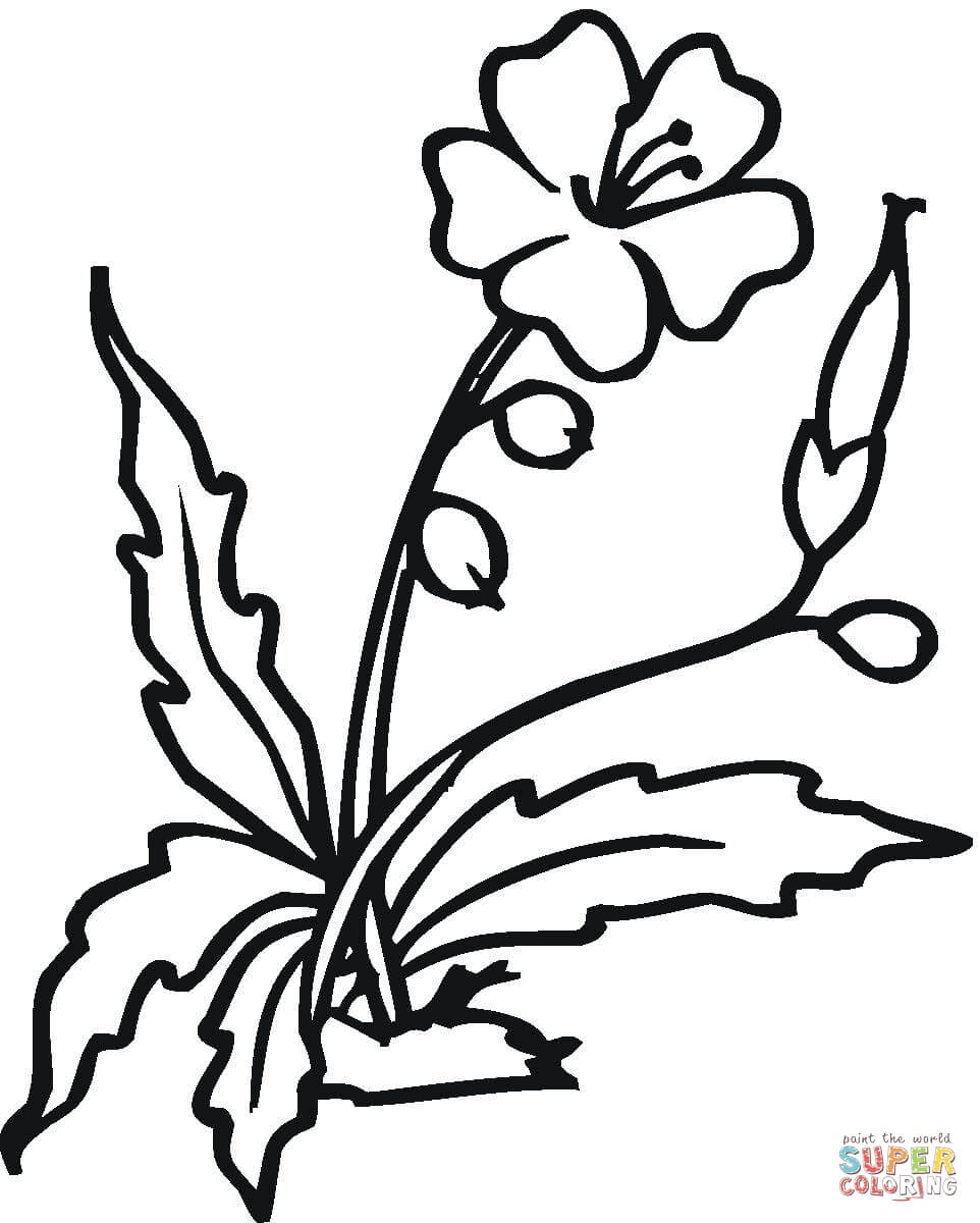 Plant clipart colouring Coloring Pages Hibiscus Flower Coloring