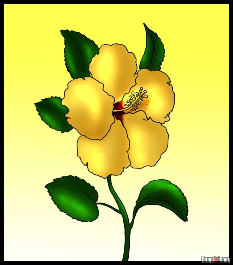 Yellow clipart gumamela Draw Step Hibiscus  Step
