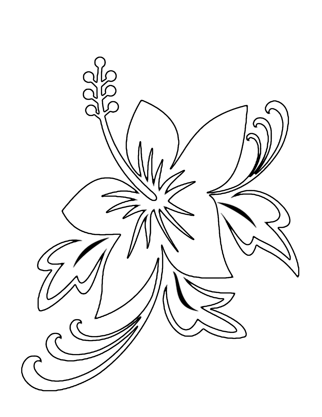 Drawn hibiscus hawaii flower Flower Solution Flower Frangipani For