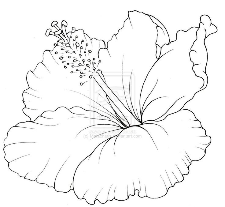 Drawn hibiscus hawaii flower Best by flower Hawaiian Flower