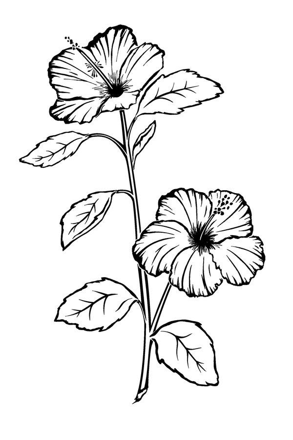 Drawn hibiscus long flower Flower on Tattoo Hibiscus Hibiscus