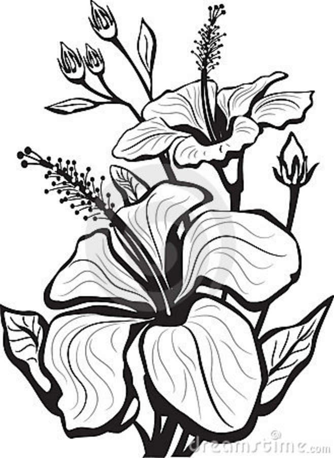 Drawn hibiscus long flower Clipart Free Download  Drawings