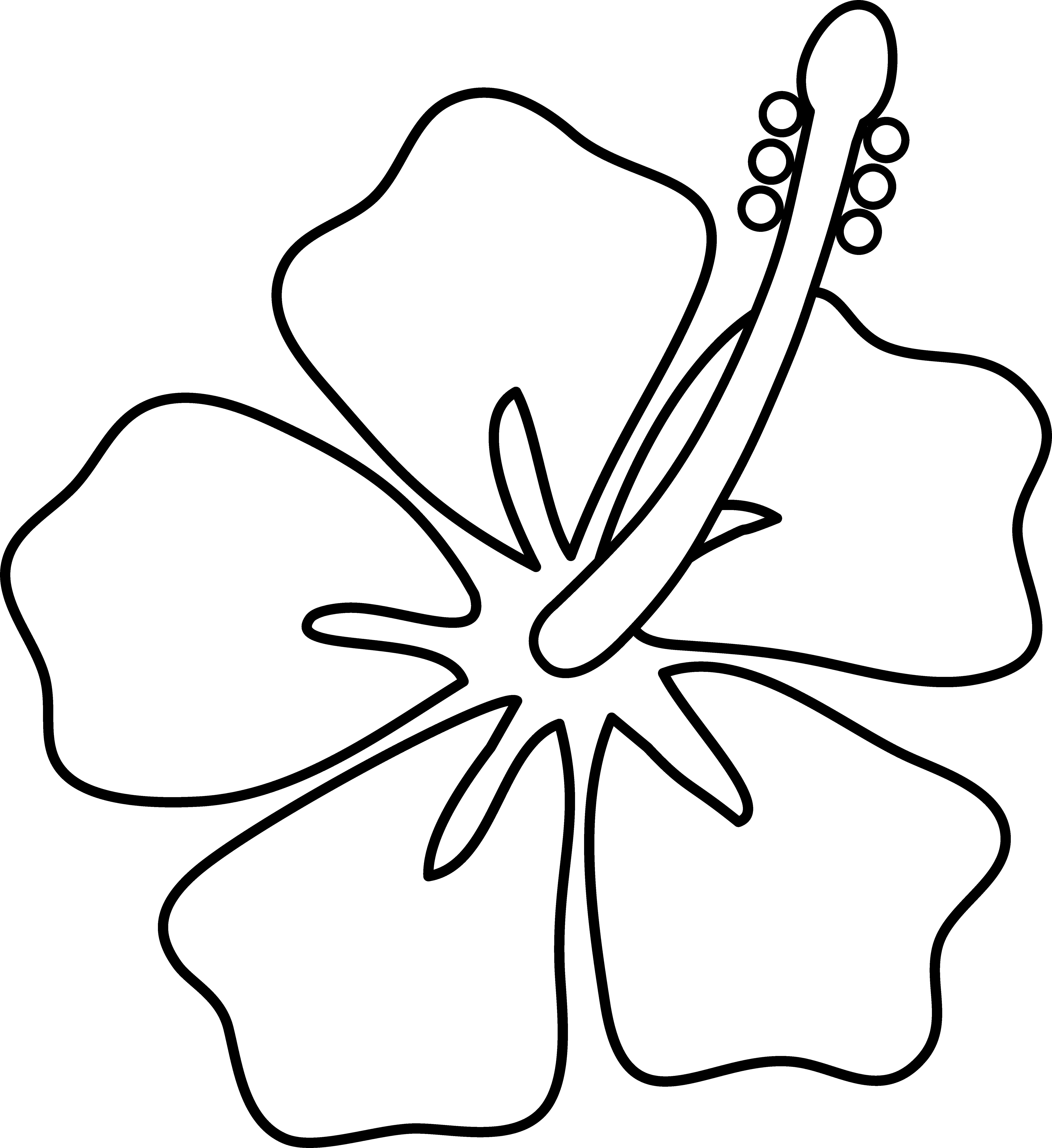 Drawn hibiscus long flower Cartoon on Free Clip
