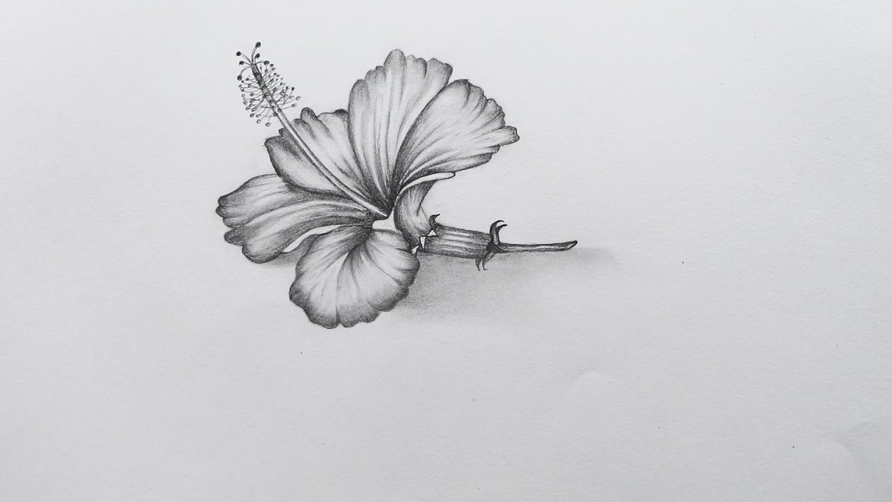Drawn hibiscus sketch Hibiscus How YouTube to to