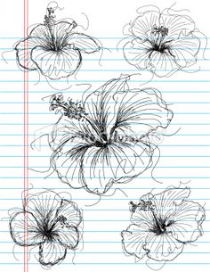 Drawn hibiscus sketch For istockimg Hibiscus com/file_thumbview_approve/ Image