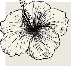 Drawn hibiscus sketch Hibiscus Hibiscus with flower flower