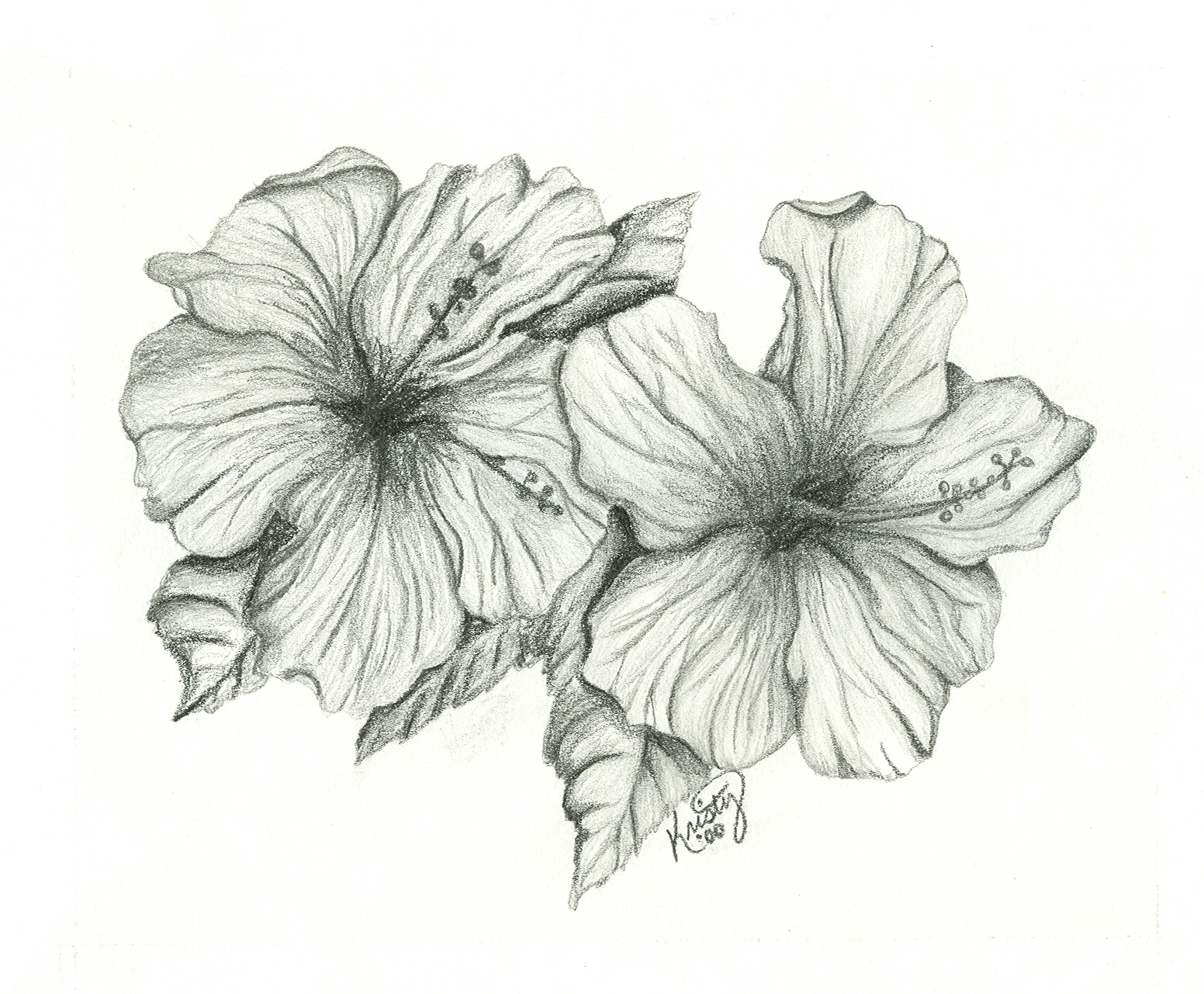 Drawn hibiscus sketch Google drawing coloring of of