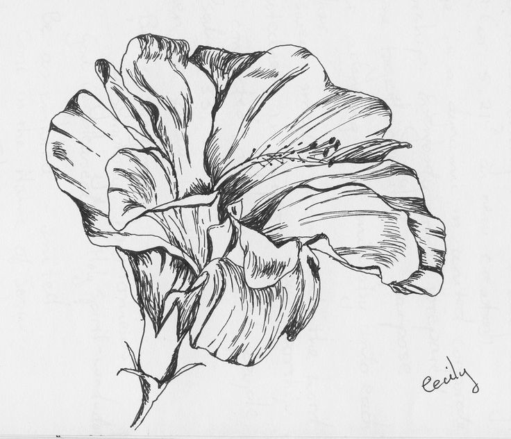 Drawn hibiscus sketch And on Flowers Flowers this