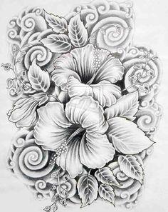 Drawn hibiscus sketch Hibiscus Bing images Hummingbird