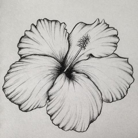 Drawn hibiscus sketch Drawing videos till them I