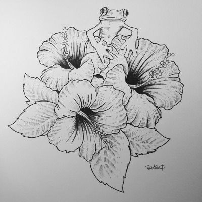Drawn hummingbird hibiscus Drawing Best Hibiscus Search 25+
