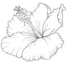 Drawn hibiscus sketch Bing More Flower Hibiscus Flower