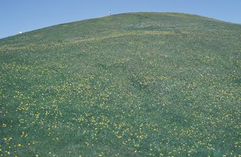 Drawn hill grassy hill Or to shallowly Grassy steeply