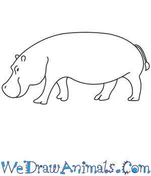 Drawn rat hippo A Draw to Hippopotamus How