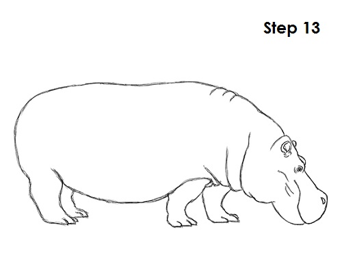 Drawn rat hippo Hippopotamus to How 13 Draw